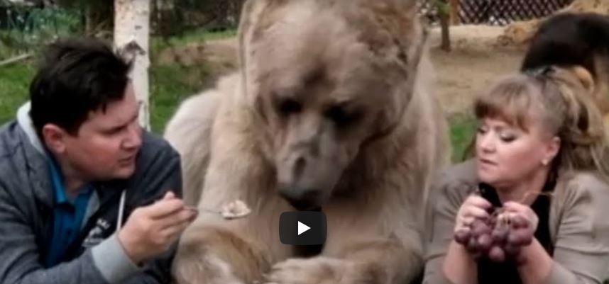 La increíble historia de un oso que vive con humanos