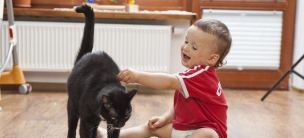 Alergia a los animales, ¿tiene cura?, ¿funcionan las vacunas?